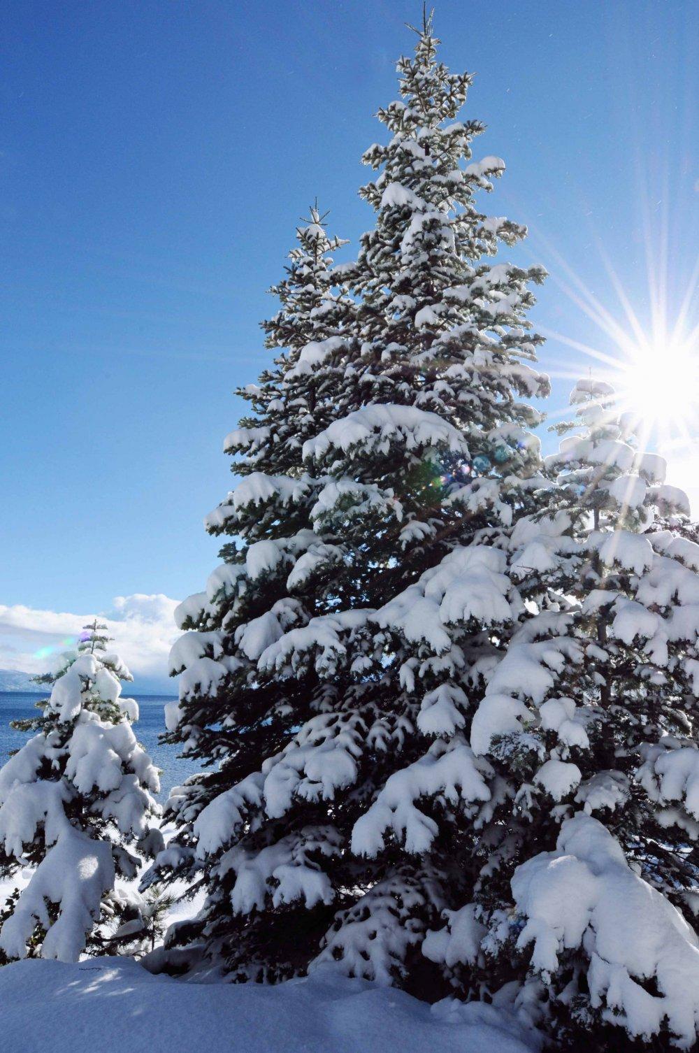 Tahoe171_1000x1506