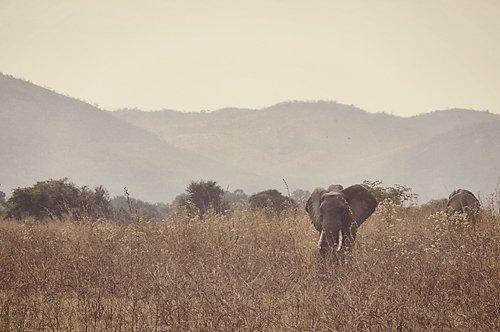Kapamba, Zambia Safari