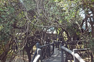 islands-of-siankaba-pathway