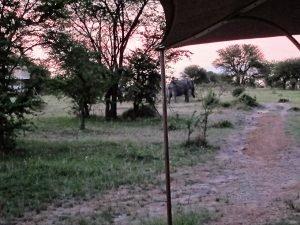 Sayari elephants by suite