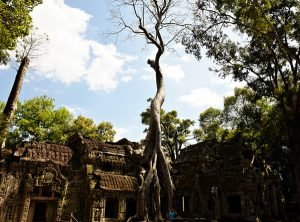 Ta Prohm Grasshopper Adventures Angkor Wat Sunrise Discovery